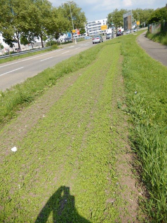 Ungedämpfte Vergleichsfläche an der Calwer Straße in Böblingen