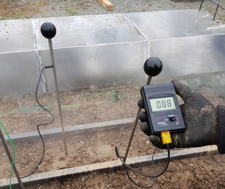 Messung der Temperaturverteilung beim Dämpfen von Erdbeerdämmen mit einem Dämpfstachelraster von 30cm