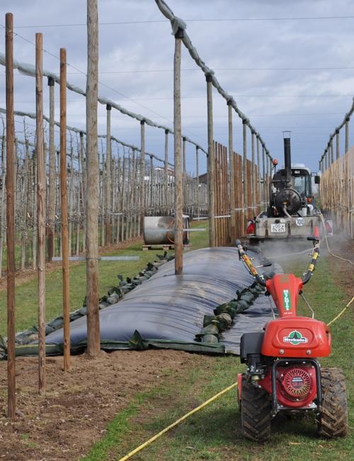 Foliendämpfung in Baumschule